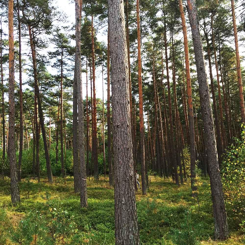 SLW_Wald_Vorschau