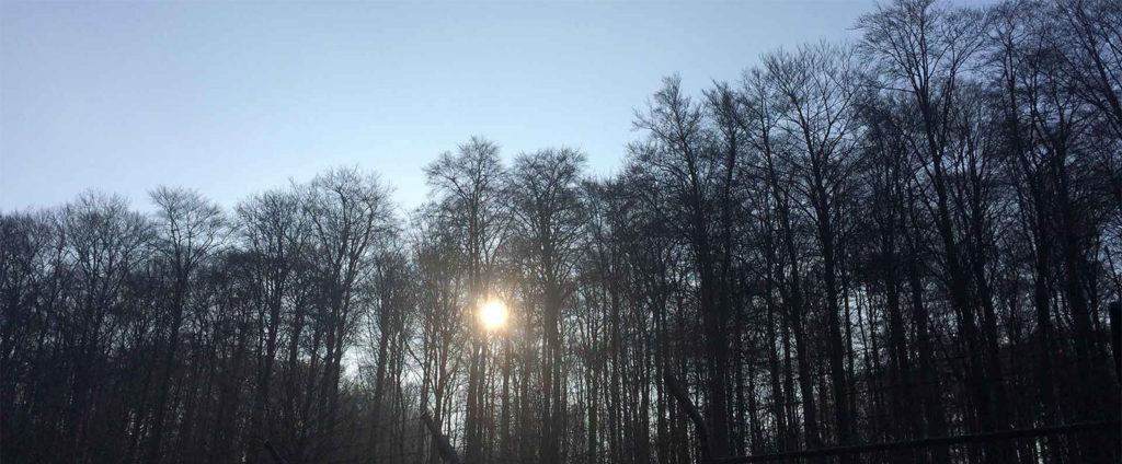 Im-Wald | stadtlandflow