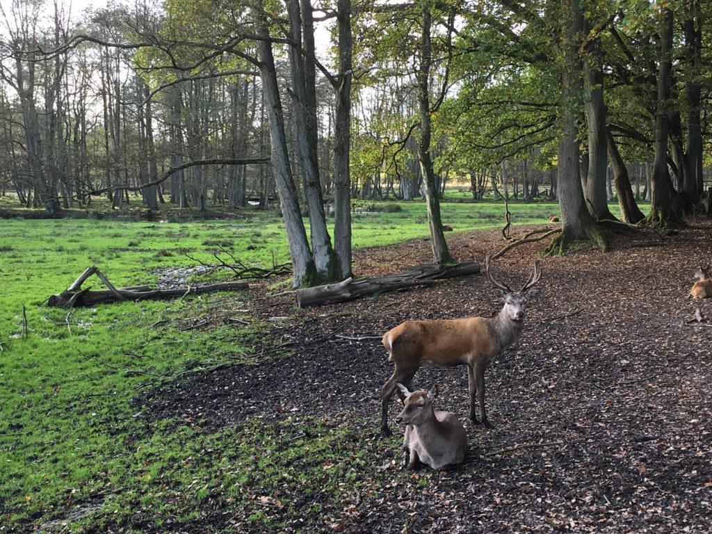 Wildpark Eekholt | stadtlandflow